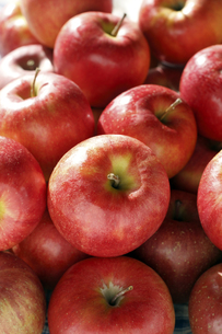 りんごの写真素材 [FYI00283197]