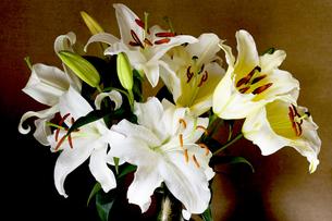 百合の花の写真素材 [FYI00283198]