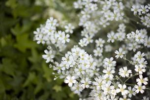 小花の写真素材 [FYI00283204]