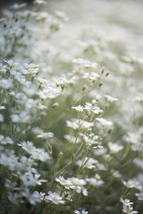 花畑の写真素材 [FYI00283208]