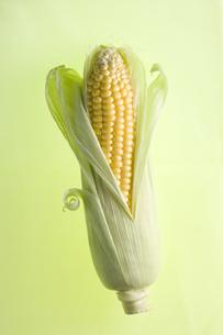 トウモロコシの写真素材 [FYI00283267]