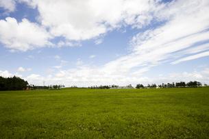 芝生と夏空の写真素材 [FYI00283292]