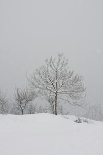 雪景色の写真素材 [FYI00283295]