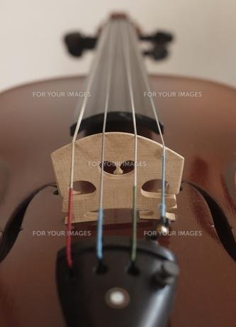 ヴァイオリンの写真素材 [FYI00283622]