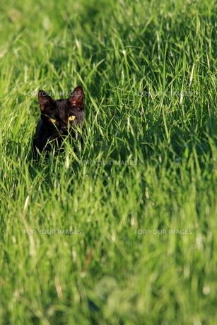 猫の写真素材 [FYI00283664]