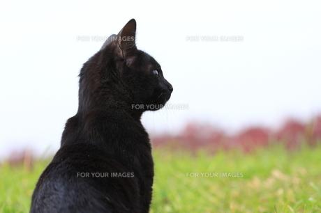猫の写真素材 [FYI00283672]