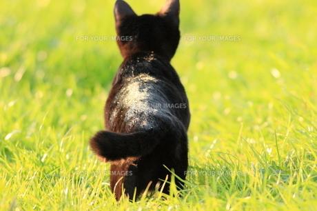 猫の写真素材 [FYI00283678]