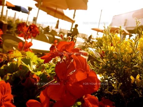ビーチと赤い花の写真素材 [FYI00283685]