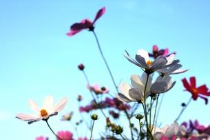 FLOWER 1の写真素材 [FYI00283703]