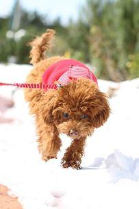 雪の日の散歩の写真素材 [FYI00283728]