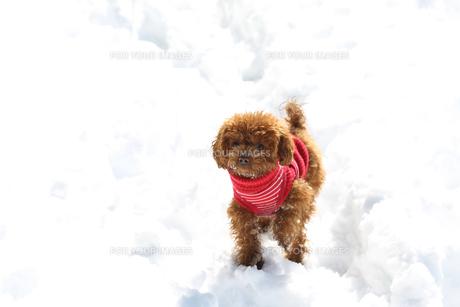 雪の日の散歩の写真素材 [FYI00283729]