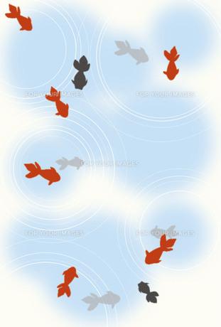 金魚のグリーティングカードの写真素材 [FYI00283791]