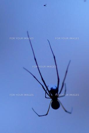空に蜘蛛の写真素材 [FYI00283797]