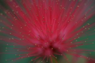 マクロ撮影した花の素材 [FYI00283828]
