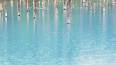 青い池 2012 ①の写真素材 [FYI00283930]