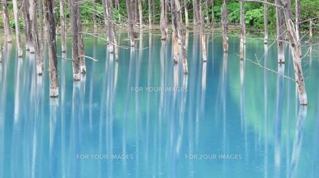 青い池 2012 ②の写真素材 [FYI00283935]