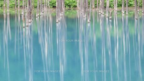 青い池 2012 ⑤の写真素材 [FYI00283942]