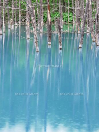 青い池 2012 ⑥の写真素材 [FYI00283948]