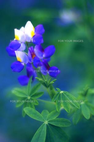 花の写真素材 [FYI00283950]