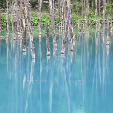 青い池 2012 ④の写真素材 [FYI00283951]