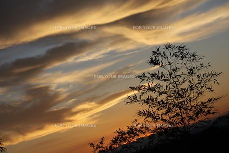 夕焼けと笹の写真素材 [FYI00283969]