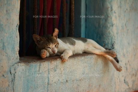 窓で眠る猫の写真素材 [FYI00284294]