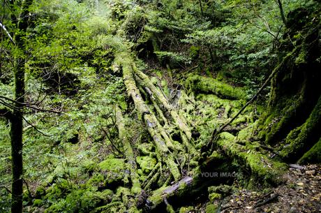世界遺産 屋久島の風景の写真素材 [FYI00284319]