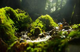 屋久島の自然の写真素材 [FYI00284329]
