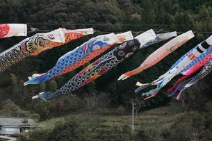 四万十川の鯉のぼりの写真素材 [FYI00284340]