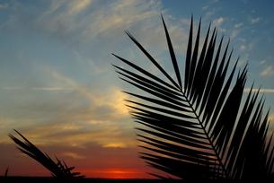 夕景の写真素材 [FYI00284404]