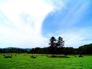 緑の季節の写真素材 [FYI00284414]