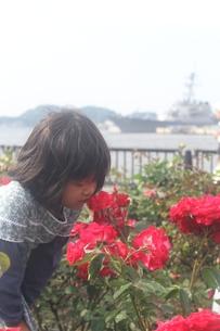 バラの香りを嗅ぐ少女の写真素材 [FYI00284461]