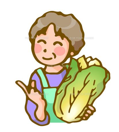 主婦と白菜の写真素材 [FYI00284841]