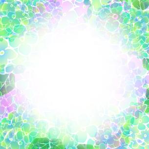 紫陽花の素材 [FYI00284865]