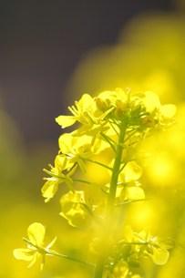 陽色。の写真素材 [FYI00285045]