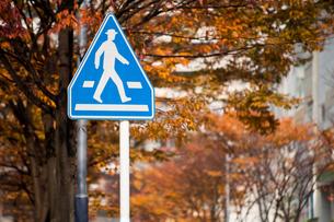 交通標識の写真素材 [FYI00285258]