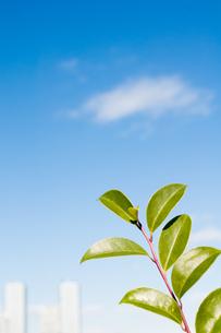 緑の葉の写真素材 [FYI00285269]