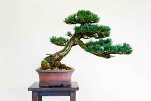盆栽の素材 [FYI00285424]