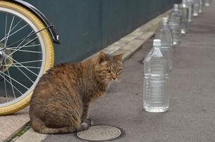猫よけは効かないぞの写真素材 [FYI00285902]