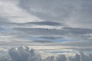 大空への飛翔の写真素材 [FYI00285905]
