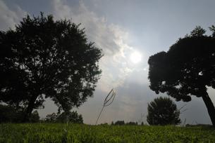 太陽に向かっての素材 [FYI00285908]