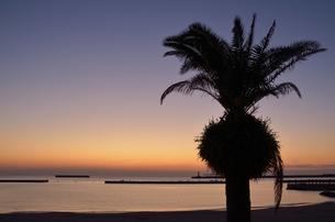 熱海の夜明けの写真素材 [FYI00285945]