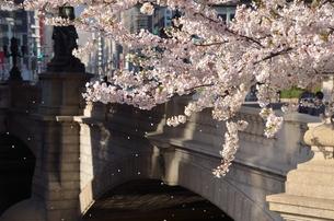 日本橋の春の写真素材 [FYI00285946]