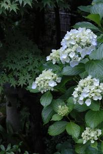 雨の花の写真素材 [FYI00285954]