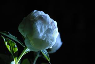 花の冠の写真素材 [FYI00285958]