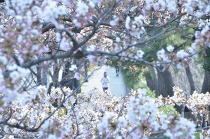 春の中を走るの写真素材 [FYI00285960]