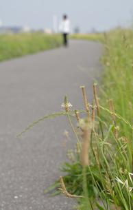 春の散歩道の写真素材 [FYI00285966]