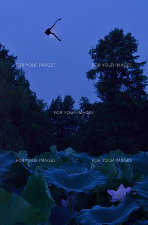夜明けの気配の写真素材 [FYI00285976]