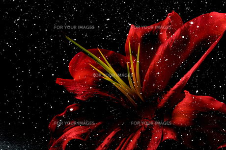 a red seasonの写真素材 [FYI00287586]