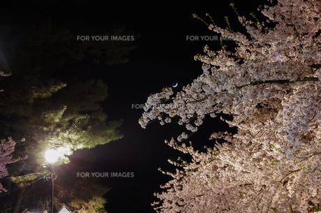 弘前公園の夜桜と月の写真素材 [FYI00287642]